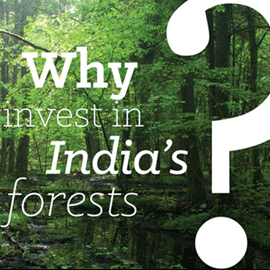 Why Forests Matter